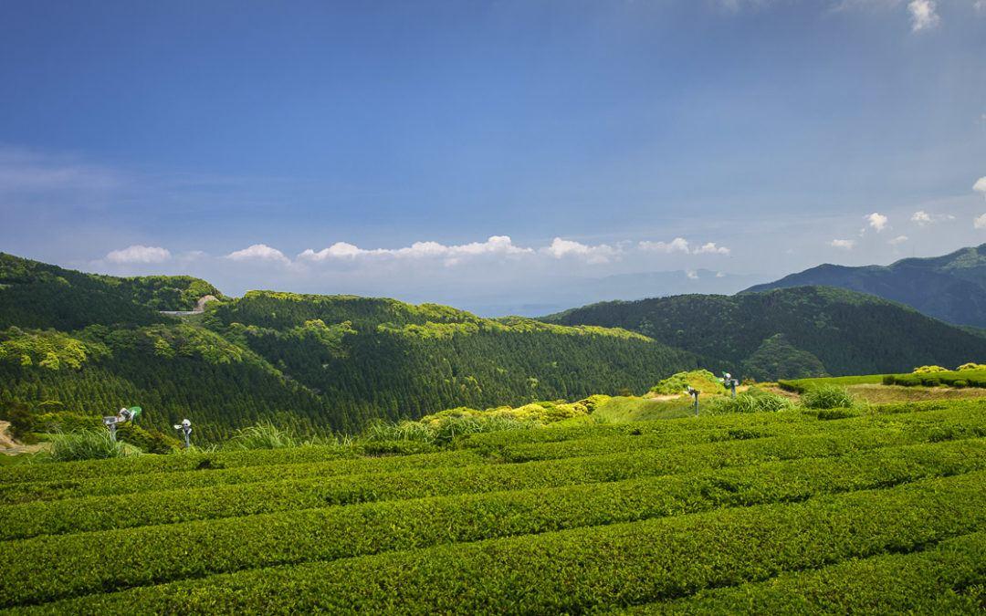 Yamashita Green Tea Farm