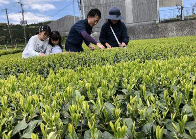 tea_experience_chiran_01