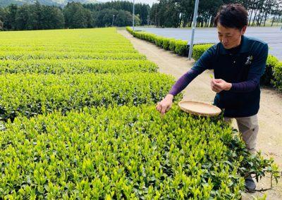 tea_experience_chiran_01c